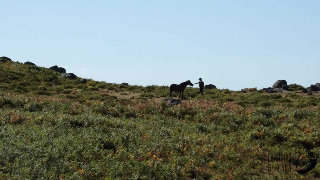Francisco com cavalo 4
