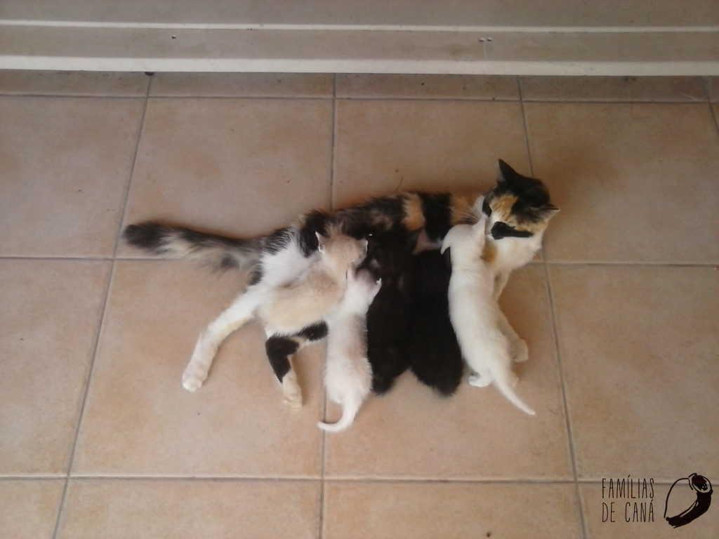 gatinhos a mamar